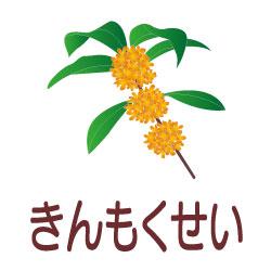 きんもくせいのピクトサイン 花/植物のピクト