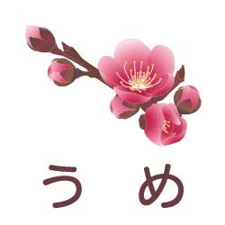 うめのピクトサイン 花/植物のピクト