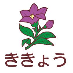 ききょうのピクトサイン 花/植物のピクト