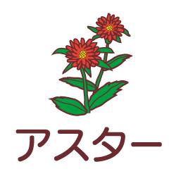 アスターのピクトサイン 花/植物のピクト